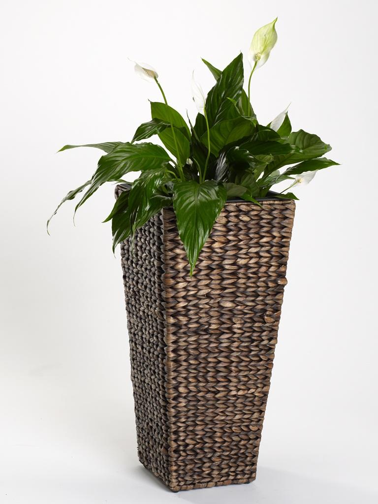 bac fleurs jacinthe d 39 eau pot de fleurs rond carr 52cm ou 60cm ligible. Black Bedroom Furniture Sets. Home Design Ideas